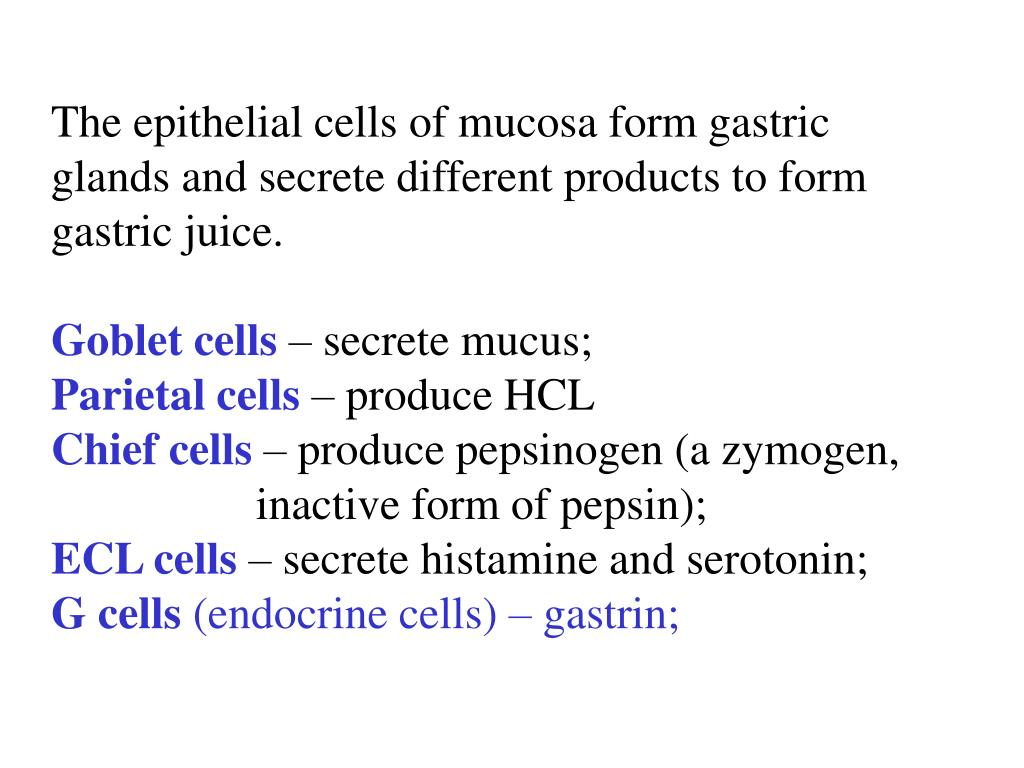 The epithelial cells of mucosa form gastric