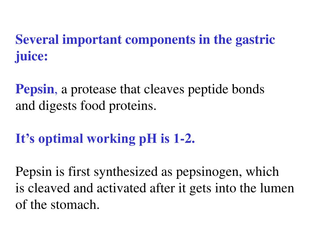 Several important components in the gastric