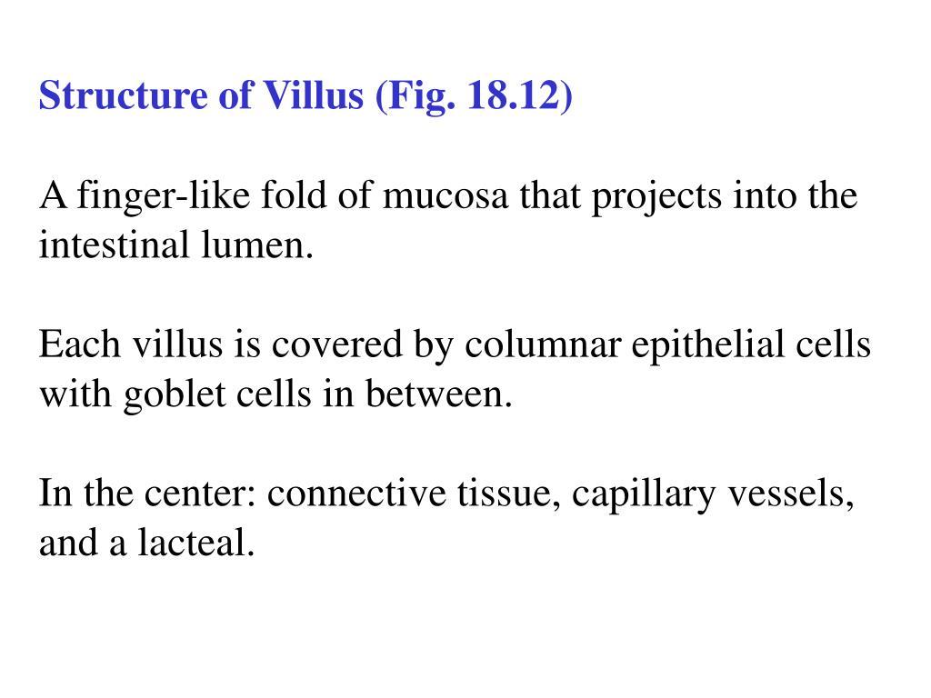 Structure of Villus (Fig. 18.12)