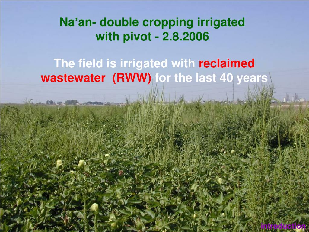 Na'an- double cropping irrigated with pivot - 2.8.2006