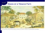 slaves on a tobacco farm