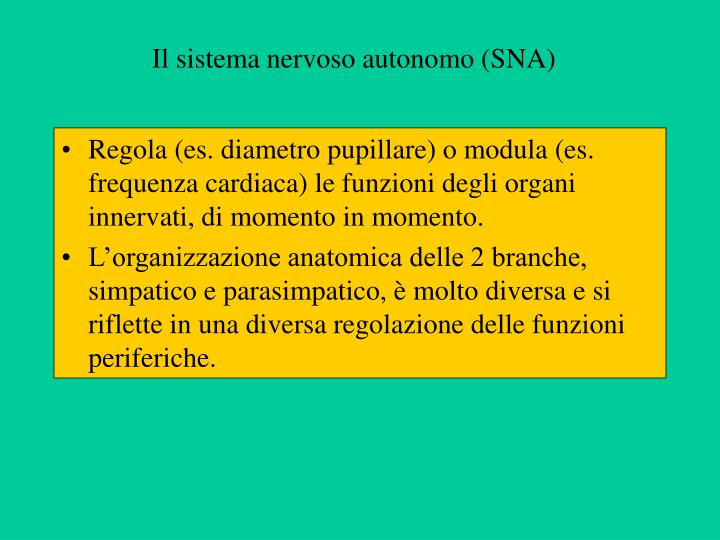 Il sistema nervoso autonomo (SNA)