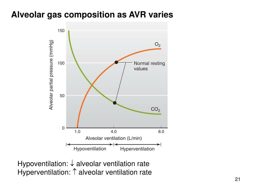 Alveolar gas composition as AVR varies