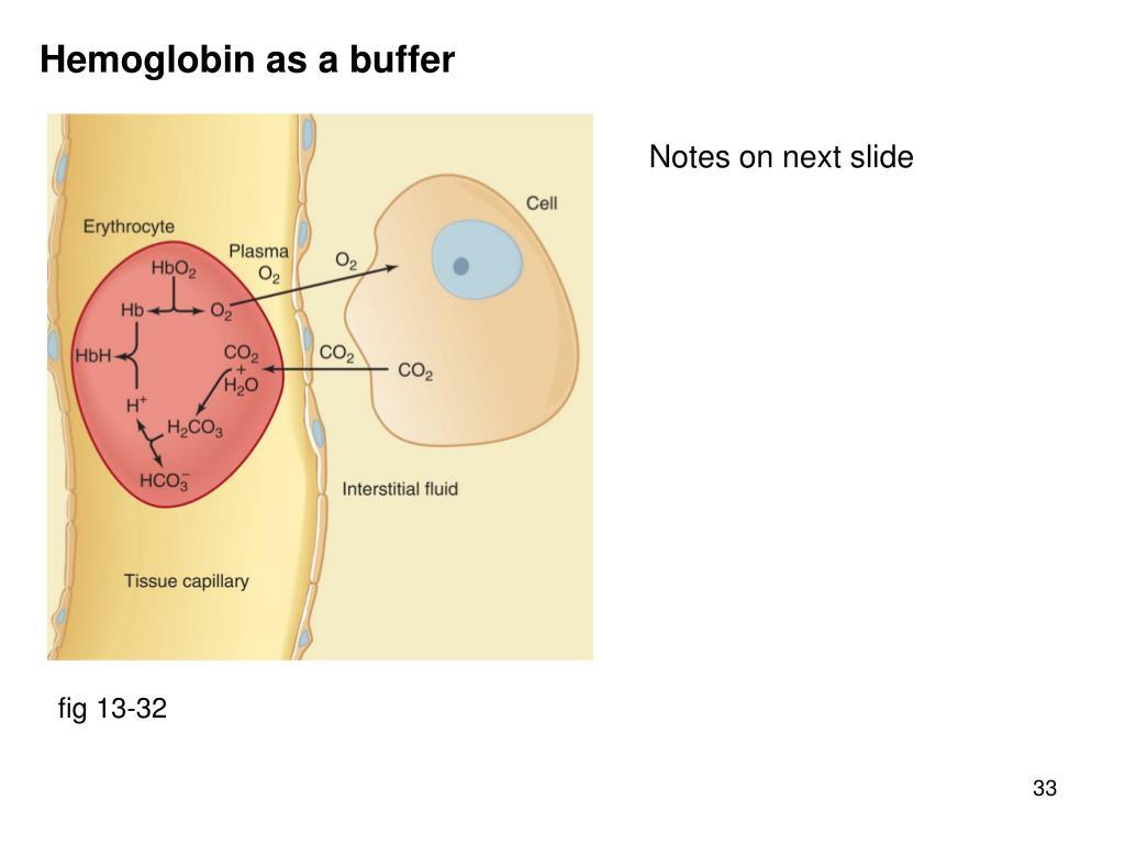 Hemoglobin as a buffer