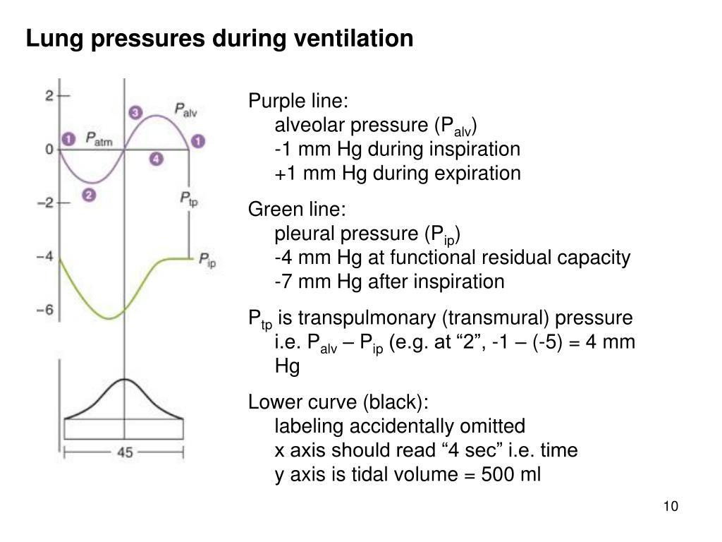 Lung pressures during ventilation