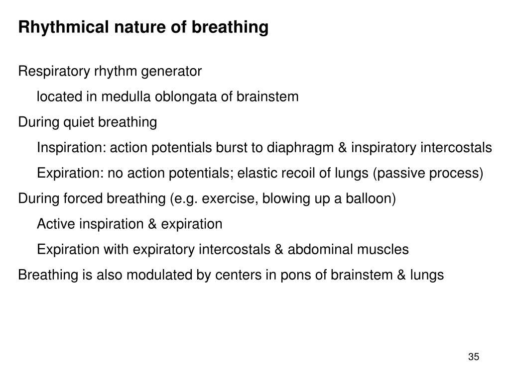 Rhythmical nature of breathing