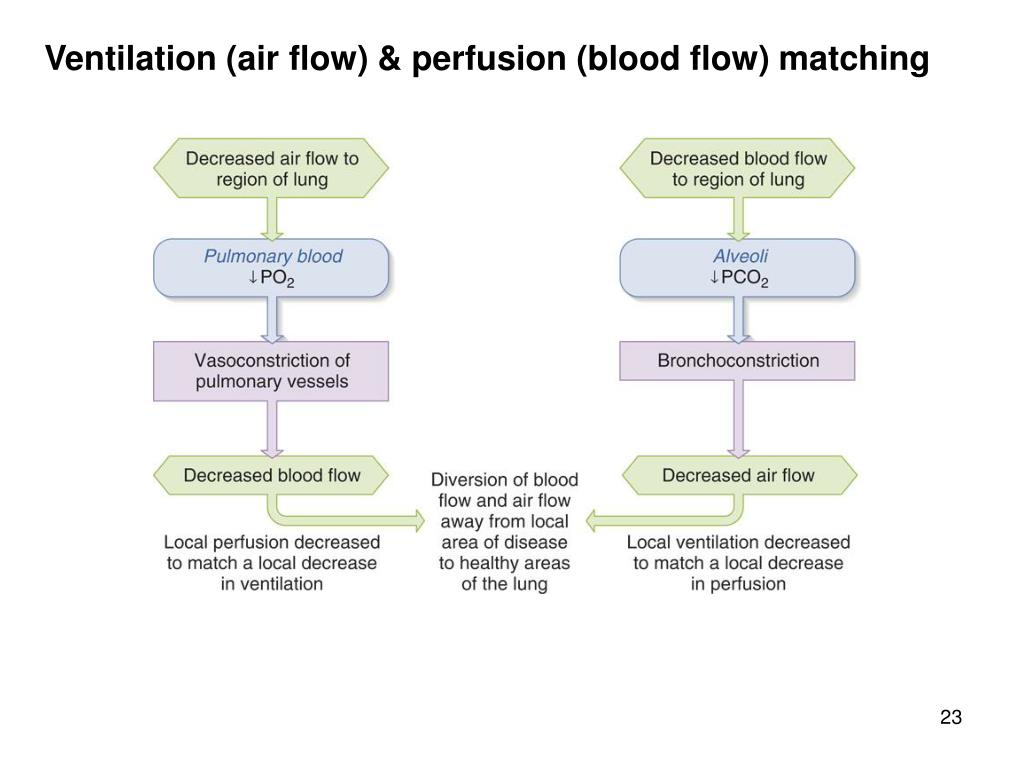Ventilation (air flow) & perfusion (blood flow) matching