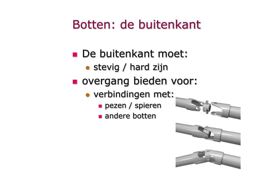 Ppt Anatomie Powerpoint Presentation Id581521