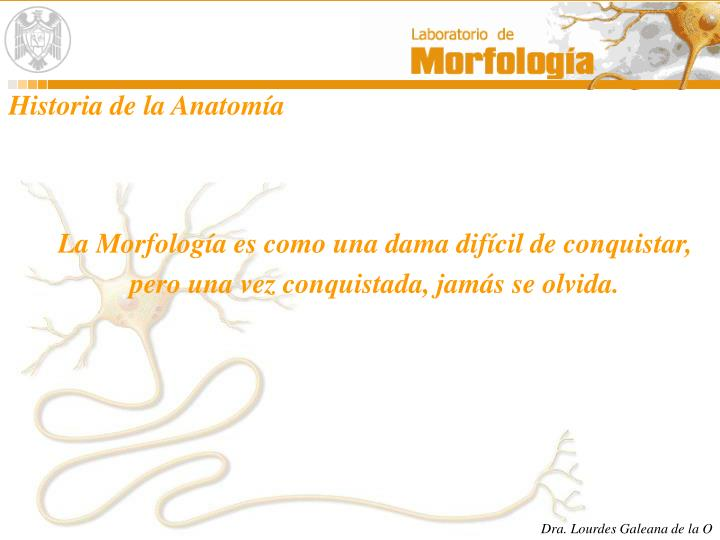 PPT - HISTORIA DE LA MORFOLOGIA PowerPoint Presentation - ID:581666
