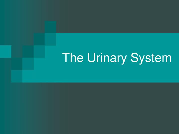 Ppt the urinary system powerpoint presentation id581715 the urinary system toneelgroepblik Image collections