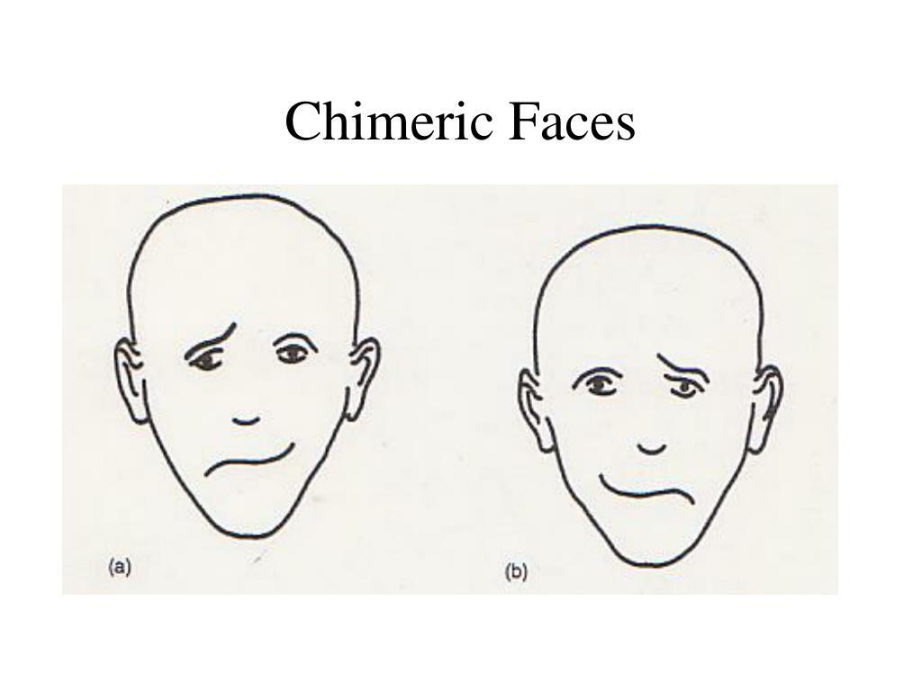 Chimeric Faces