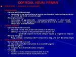 cortexul vizual primar30