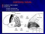 cortexul vizual