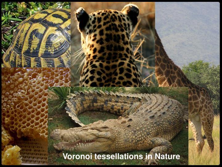 Voronoi tessellations in Nature