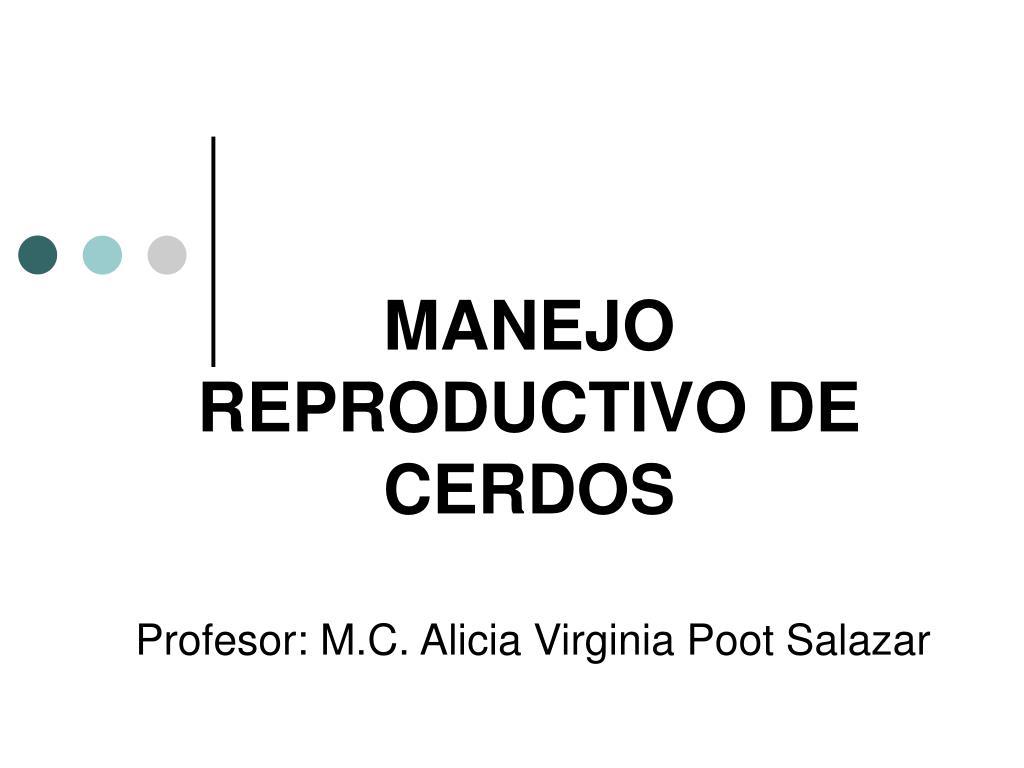 PPT - MANEJO REPRODUCTIVO DE CERDOS PowerPoint Presentation - ID:582425