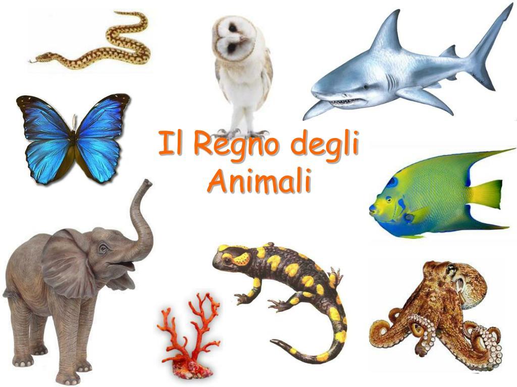 il regno degli animali l.