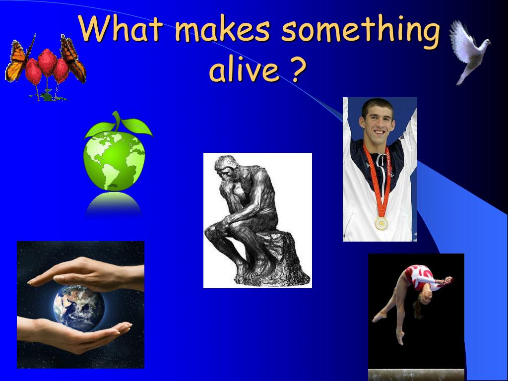 what makes something alive l.