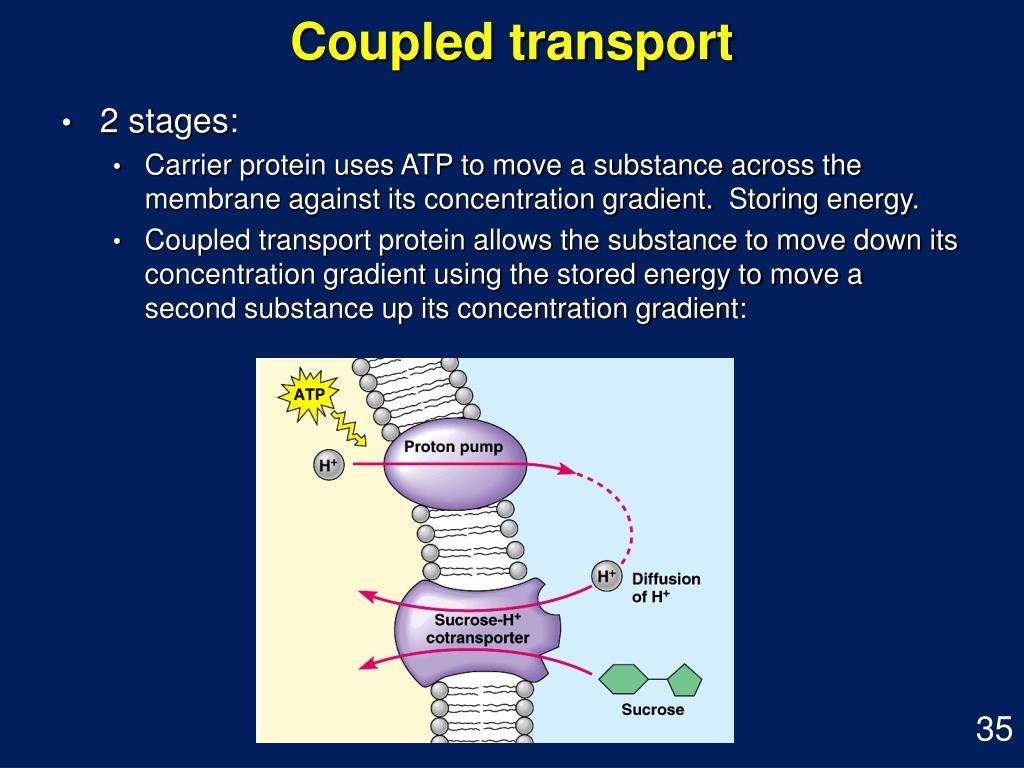 Coupled transport
