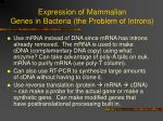 expression of mammalian genes in bacteria the problem of introns