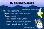 b seeing colors4