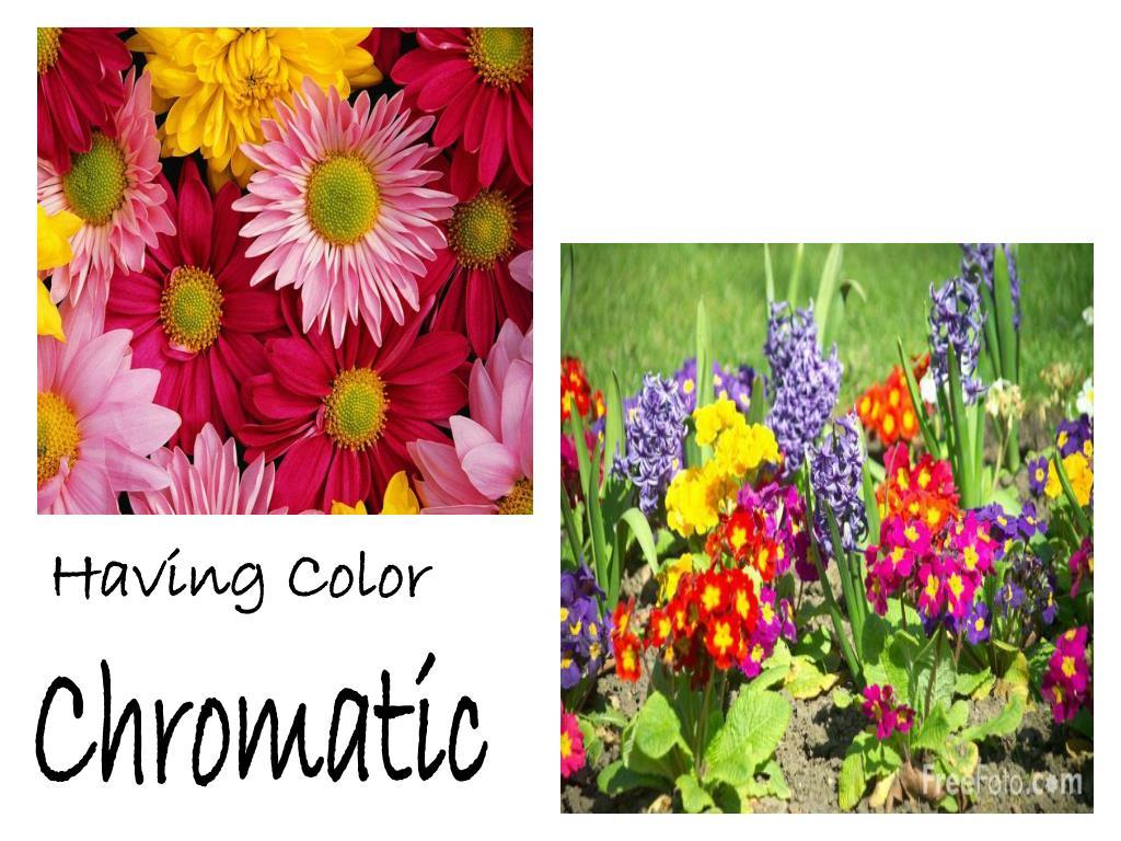 Having Color