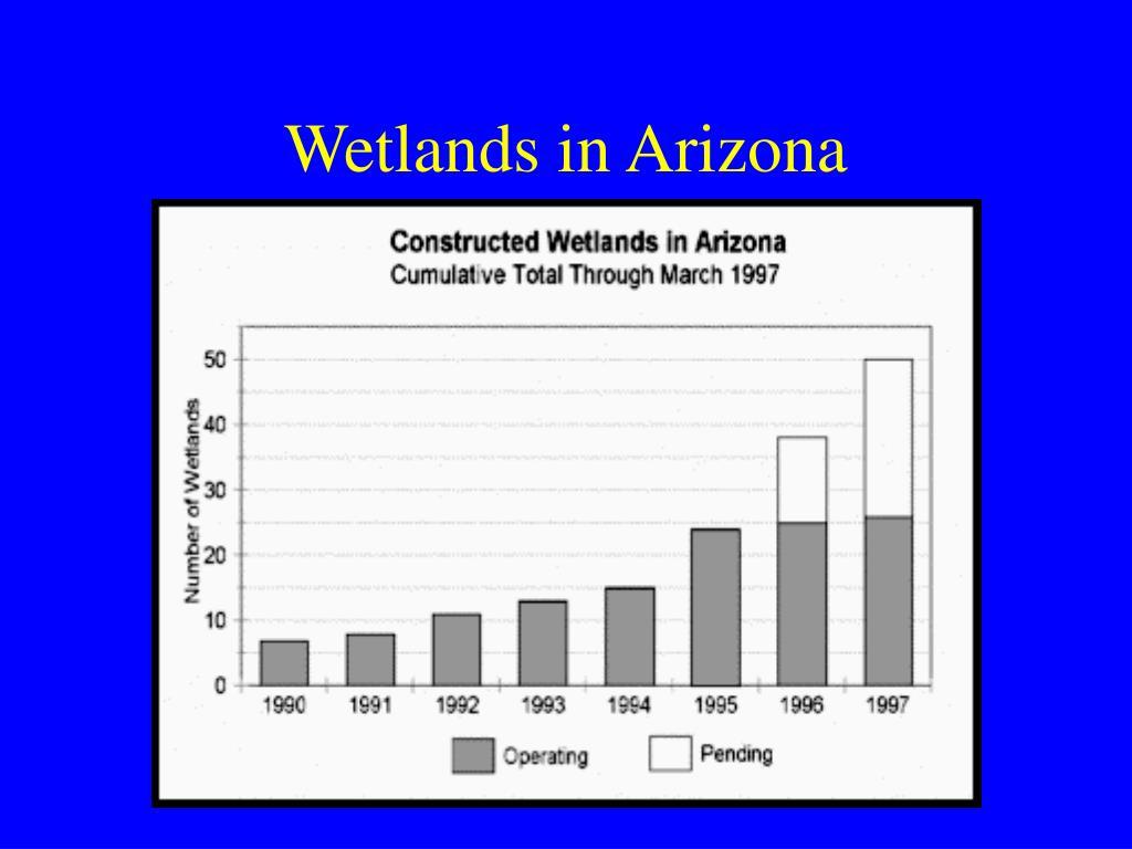Wetlands in Arizona
