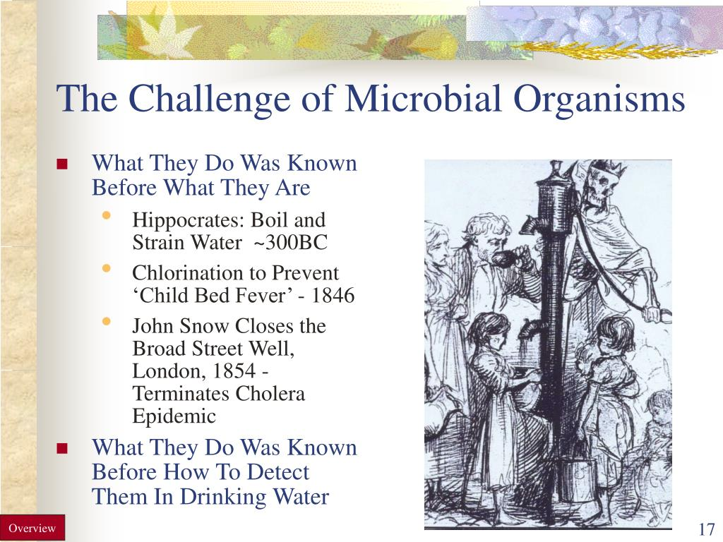 The Challenge of Microbial Organisms