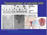 transformation of cervical cells