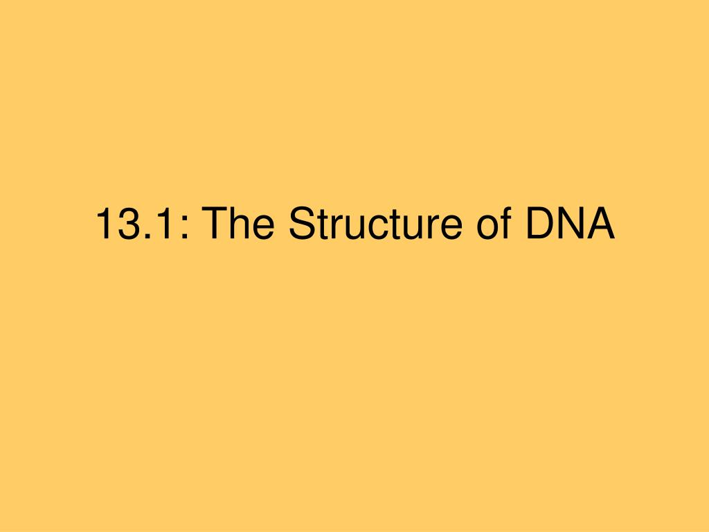 13 1 the structure of dna l.