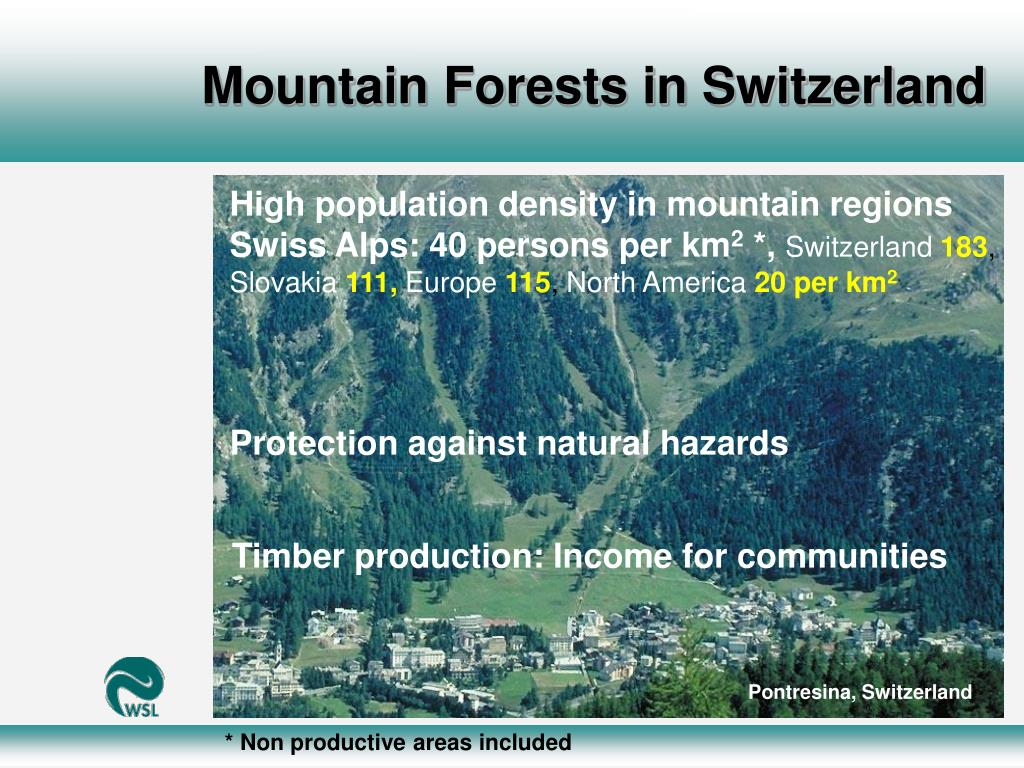 Mountain Forests in Switzerland