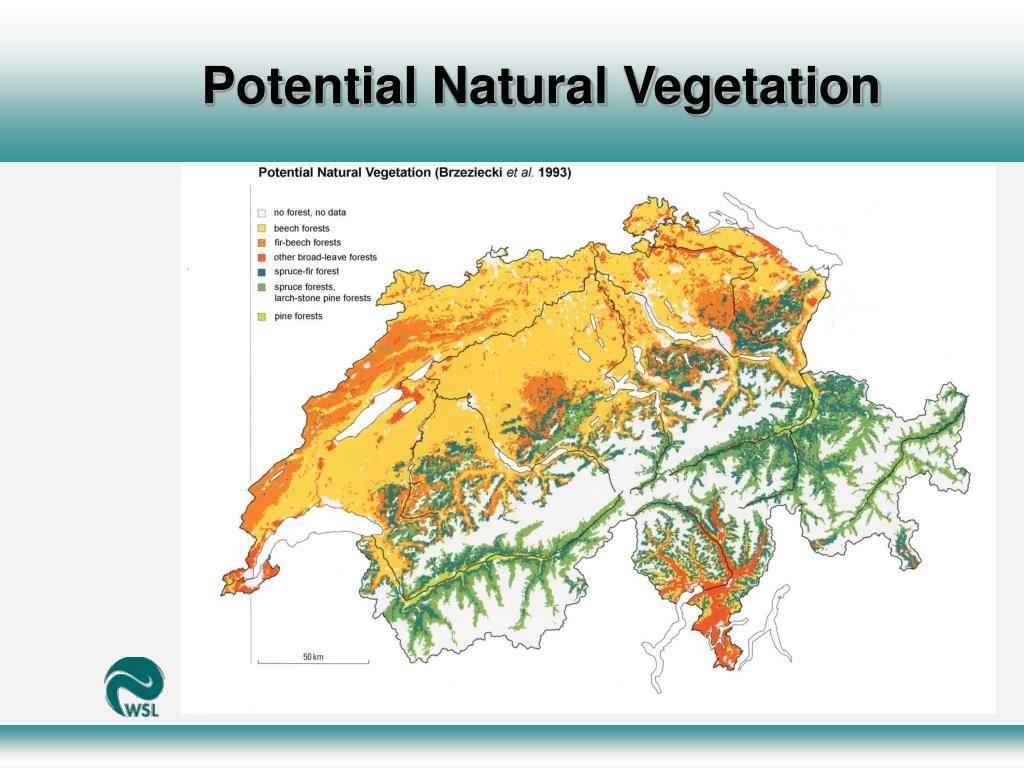 Potential Natural Vegetation