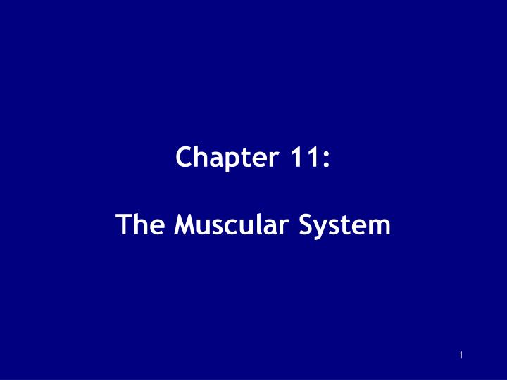 chapter 11 the muscular system n.