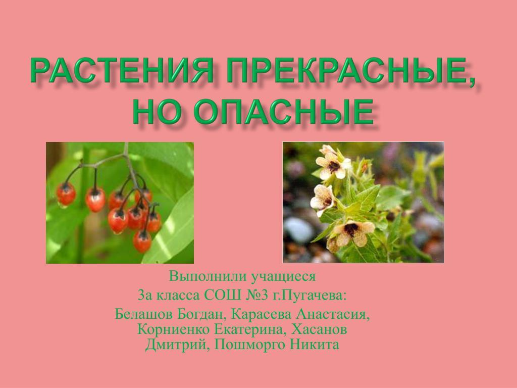 Растения прекрасные, но опасные