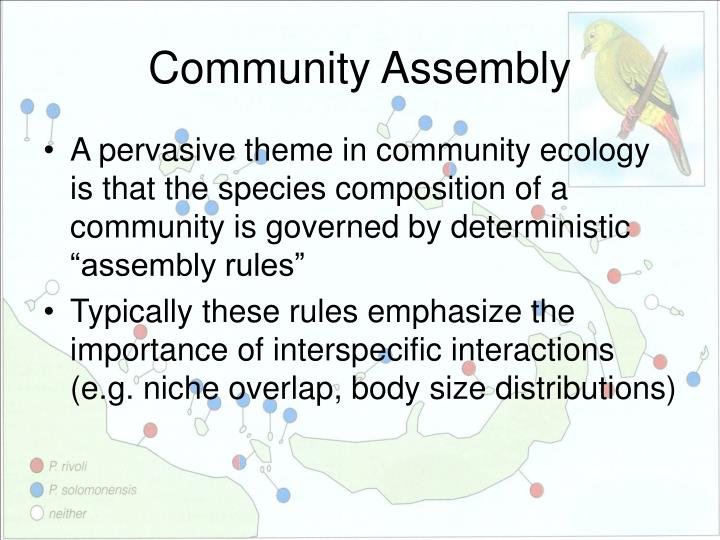 community assembly n.