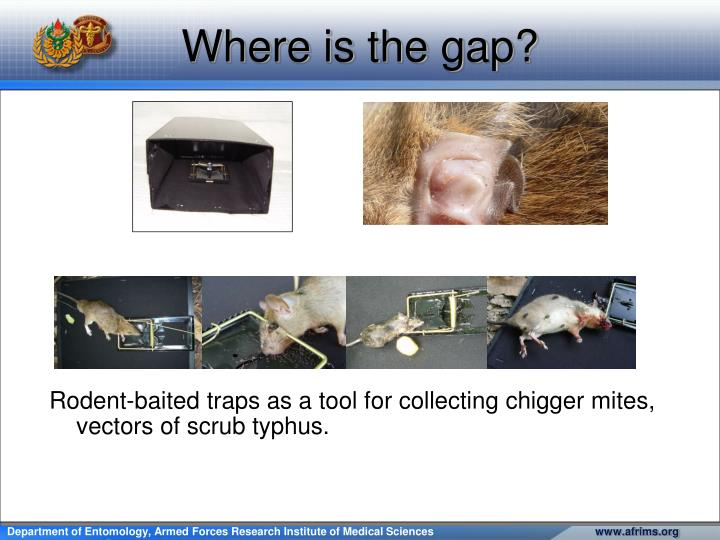 Rodent-baited traps as a tool for collecting chigger mites, vectors of scrub typhus.