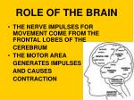 role of the brain