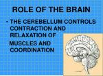 role of the brain15