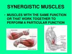 synergistic muscles