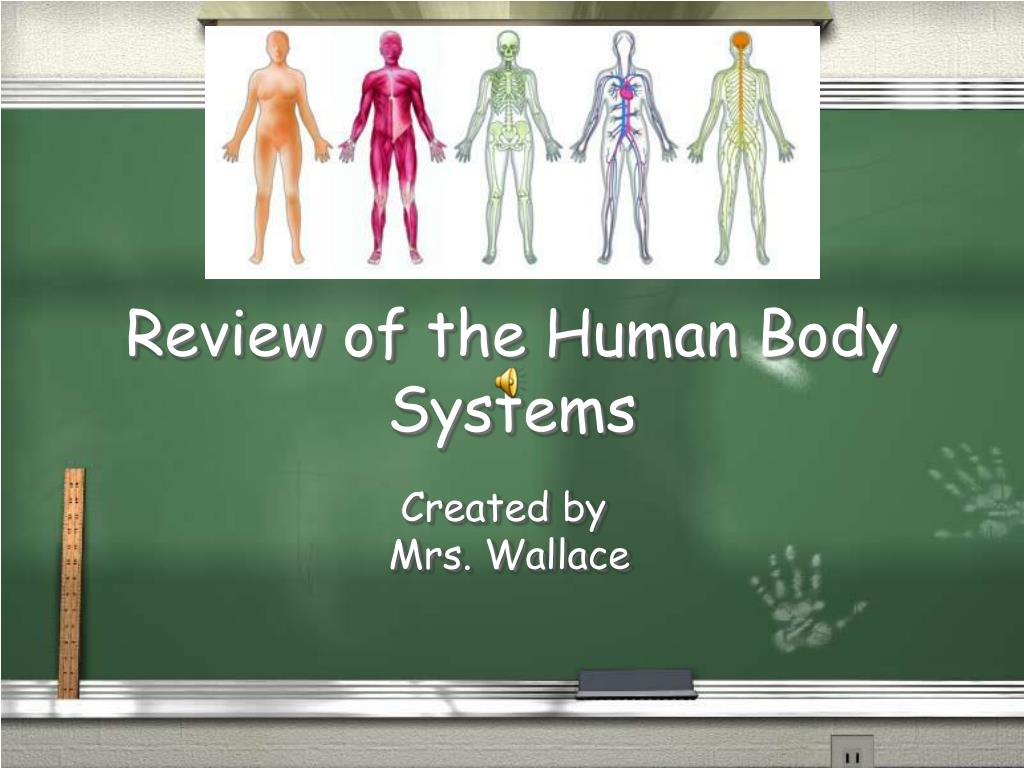 review of the human body systems l.