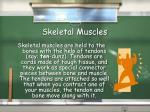 skeletal muscles12
