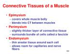 connective tissues of a muscle6