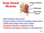 deep gluteal muscles