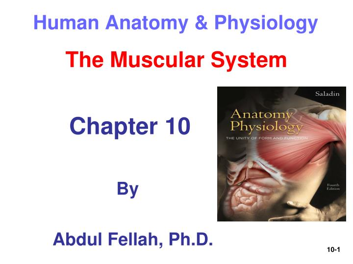 PPT - Human Anatomy & Physiology PowerPoint Presentation - ID:58779