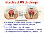 muscles of ug diaphragm