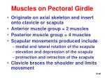 muscles on pectoral girdle