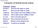 categories of skeletal muscle actions