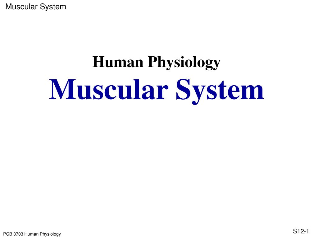human physiology muscular system l.