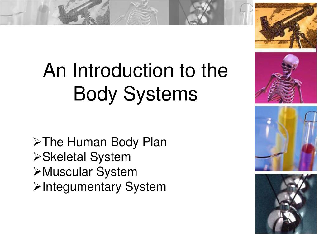 an introduction to the body systems l.