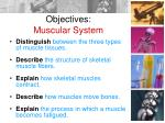 objectives muscular system