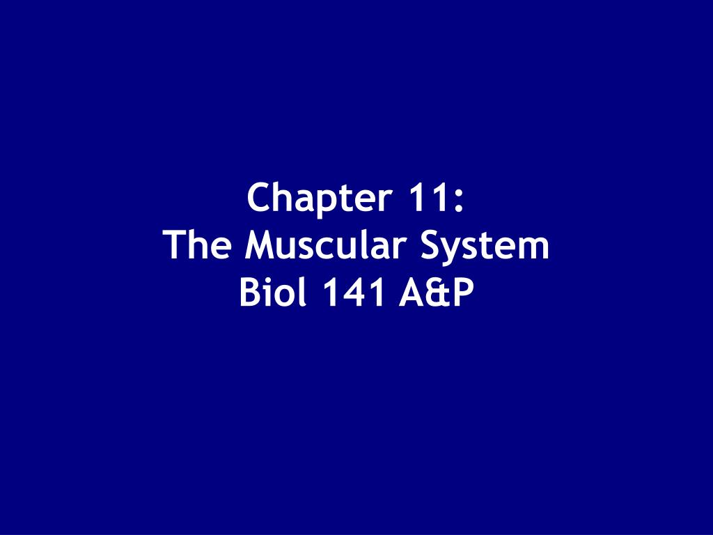 chapter 11 the muscular system biol 141 a p l.